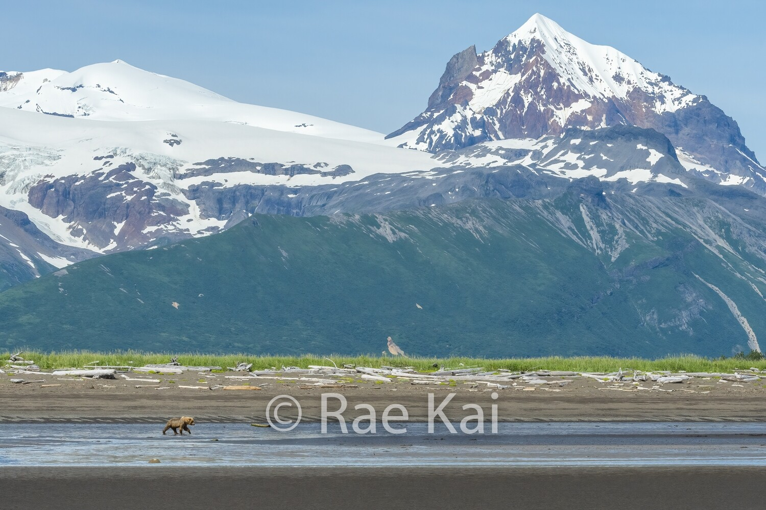 Brown Bear Beach Scene-Traditional Photo