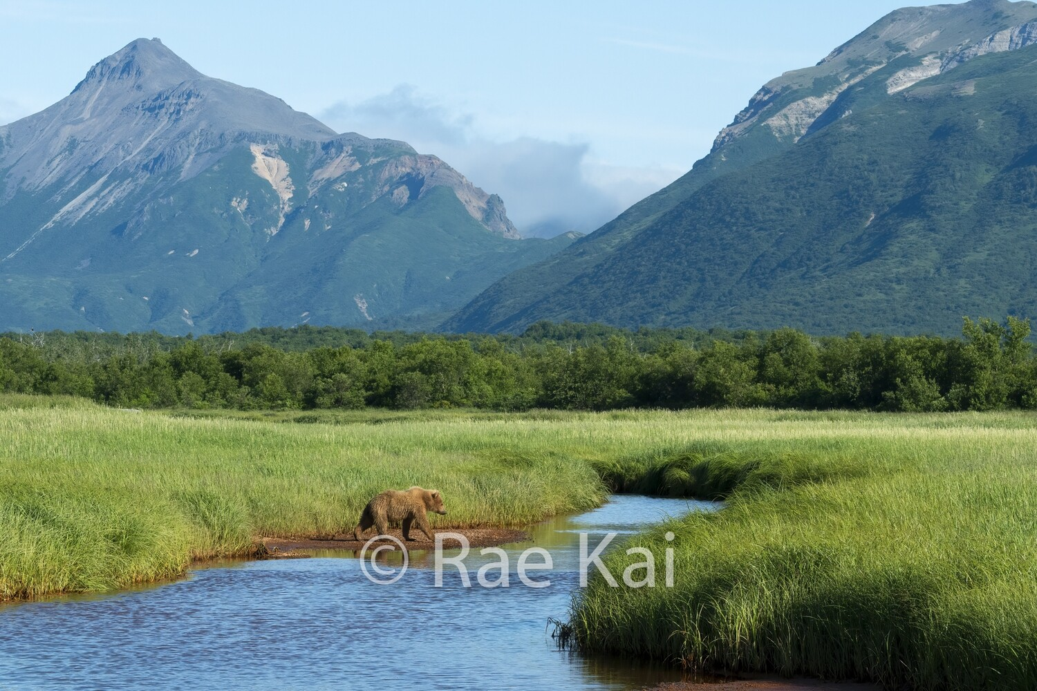 Brown Bear River Crossing-Traditional Photo