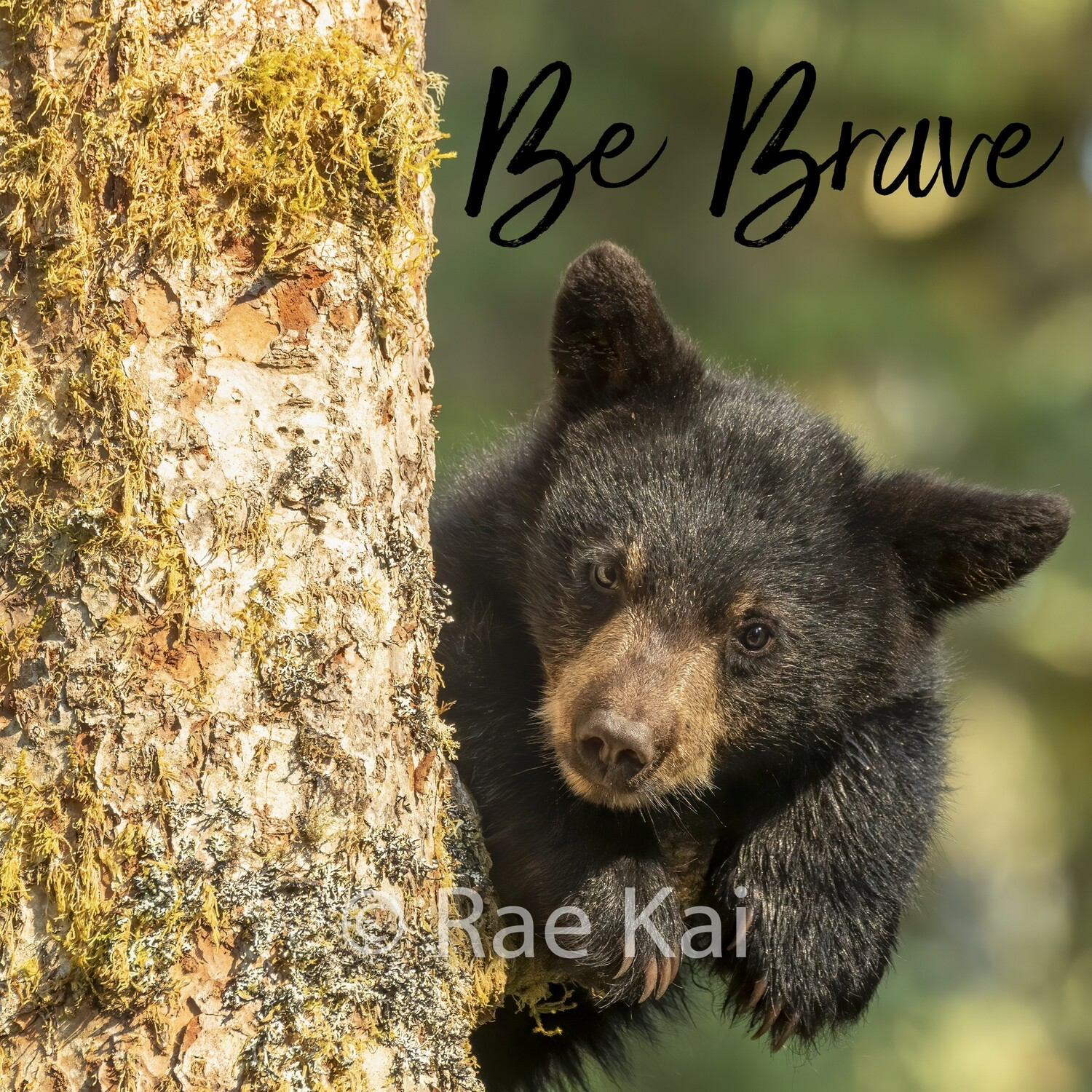 Be Brave (Cub in Tree)-Inspirational Square Photo