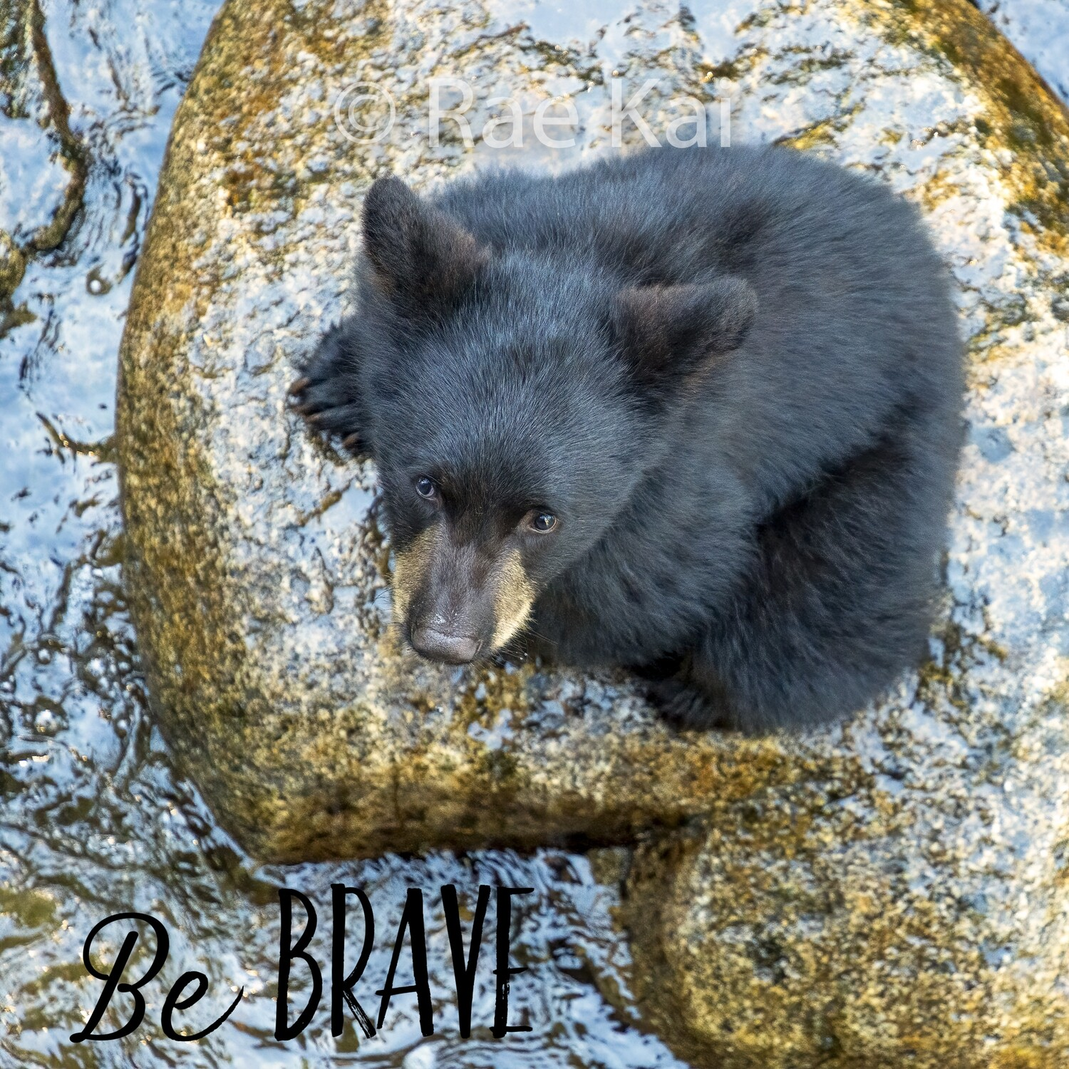 Be Brave (Cub on Rock)-Inspirational Square Photo