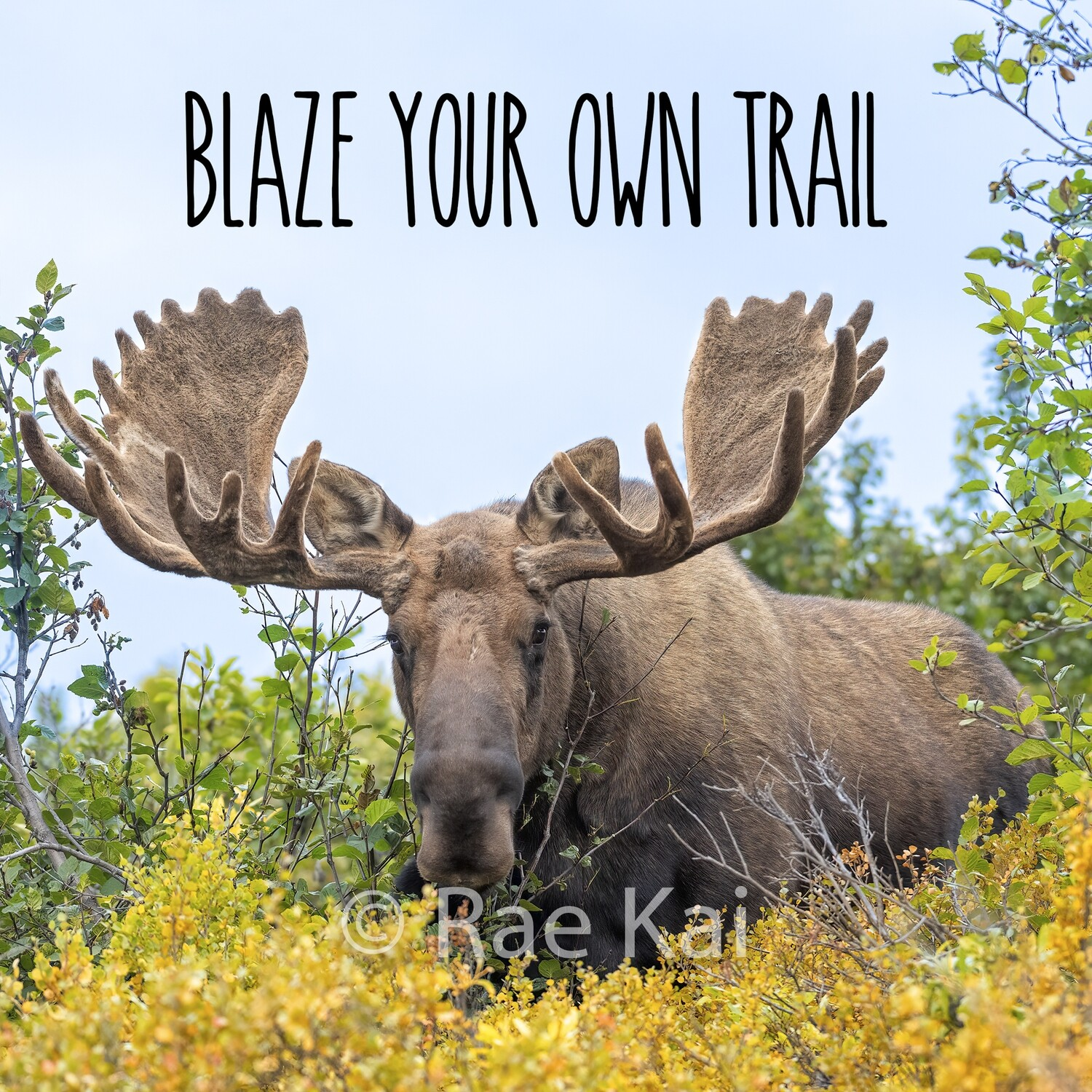 Blaze Your Own Trail-Inspirational Square Photo