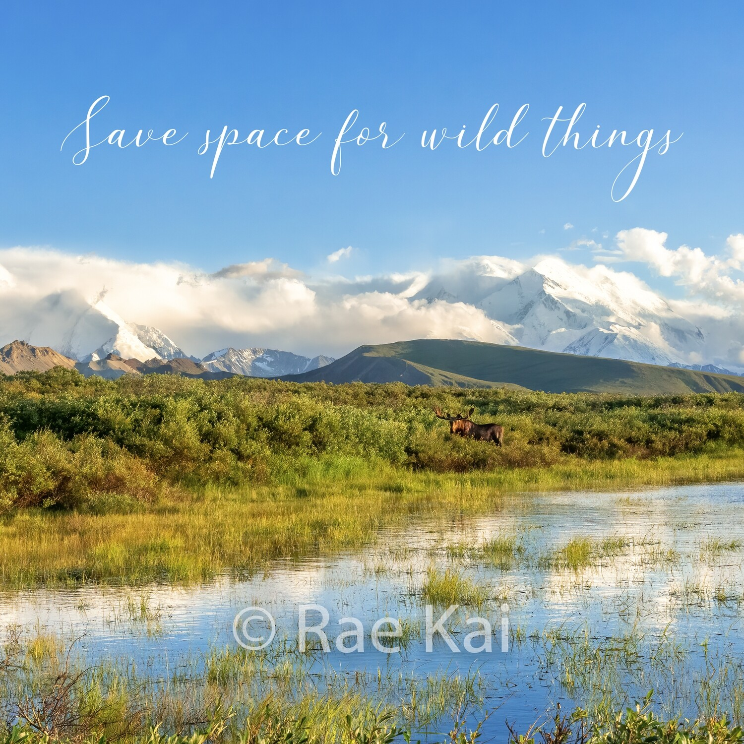 Save Space For Wild Things-Inspirational Square Photo