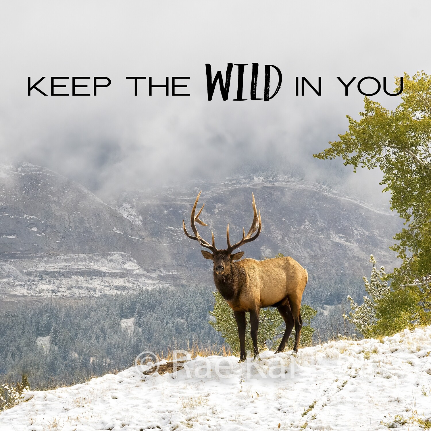 Keep the Wild in You-Inspirational Square Photo