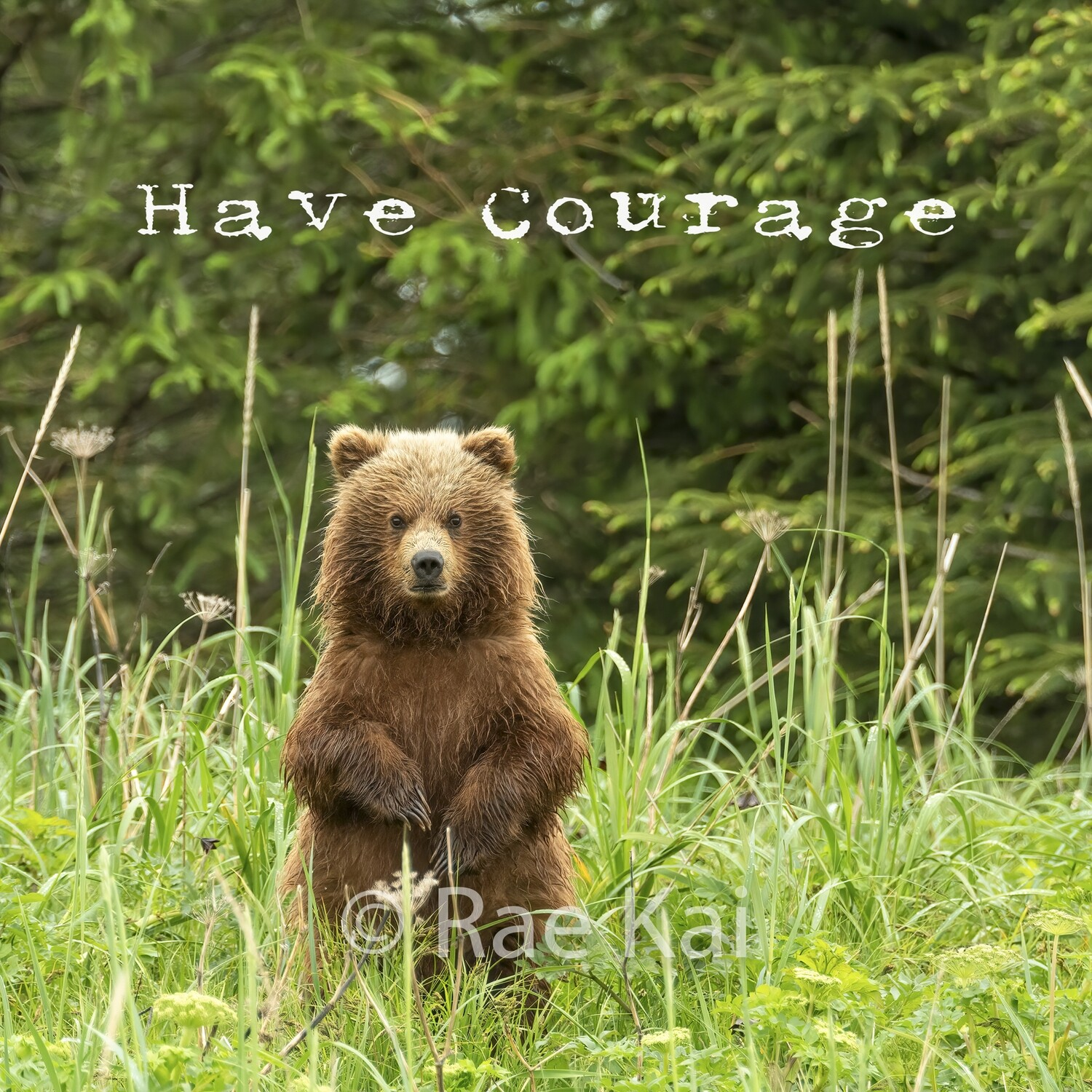 Have Courage-Inspirational Square Photo