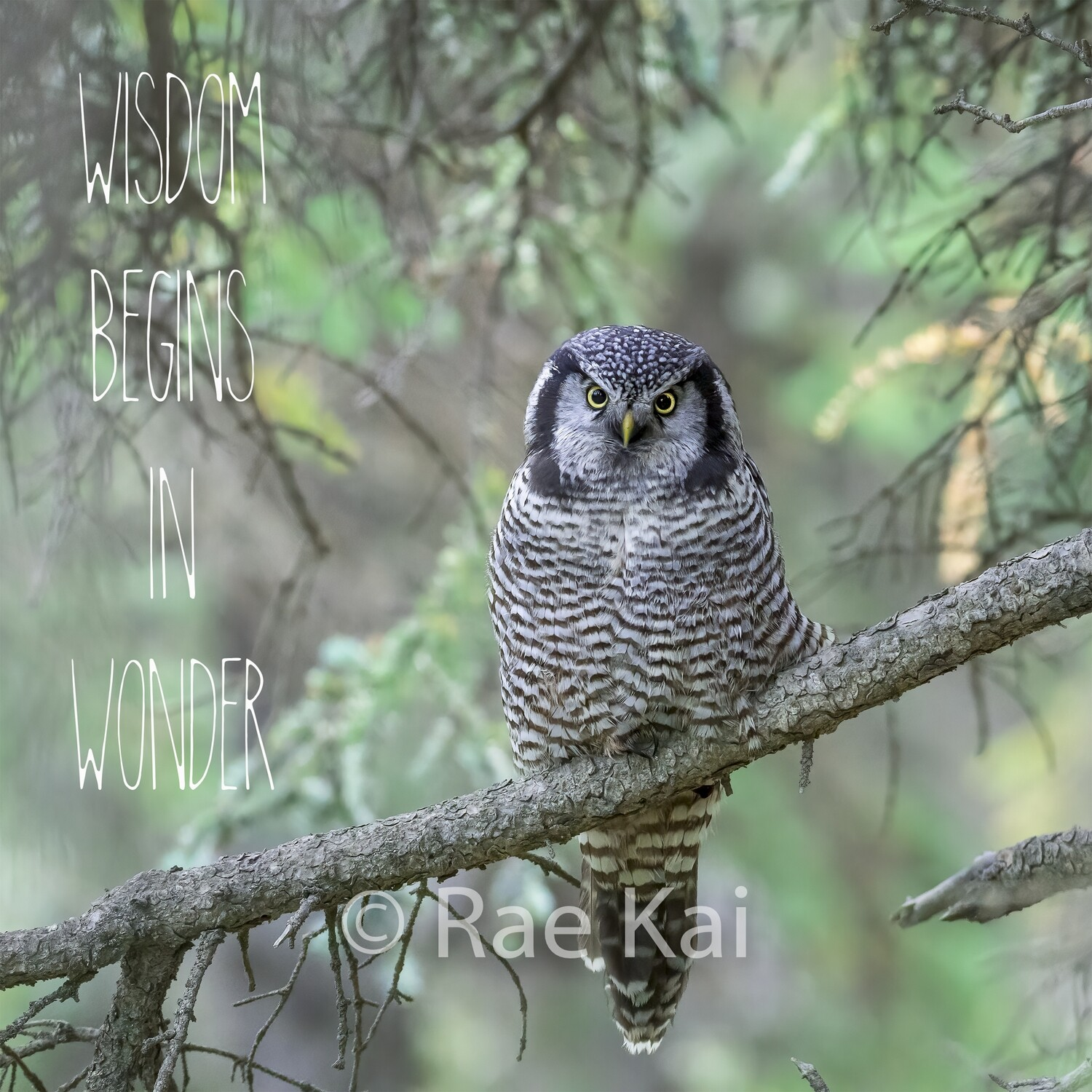 Wisdom Begins In Wonder-Inspirational Square Photo