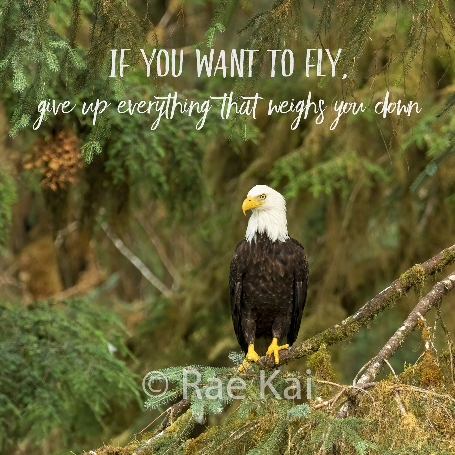 If You Want to Fly-Inspirational Square Photo