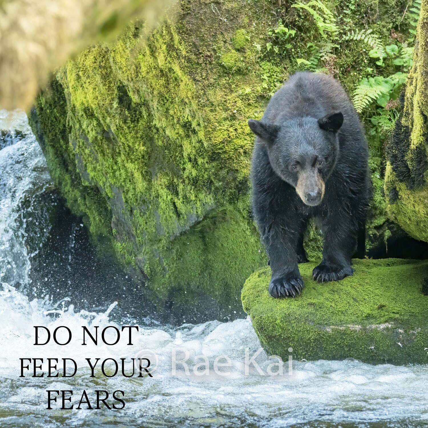 Do Not Feed Your Fears-Inspirational Square Photo