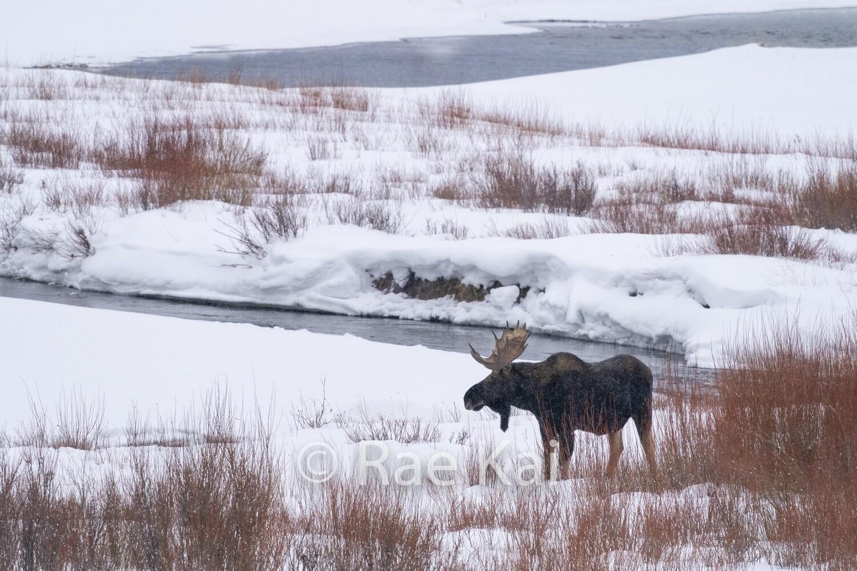Winter Habitat-Traditional Photo