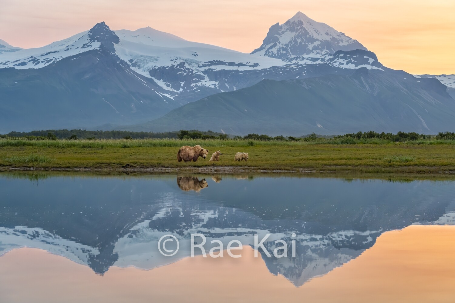 Brown Bear Family Sunset Reflection-Traditional Photo