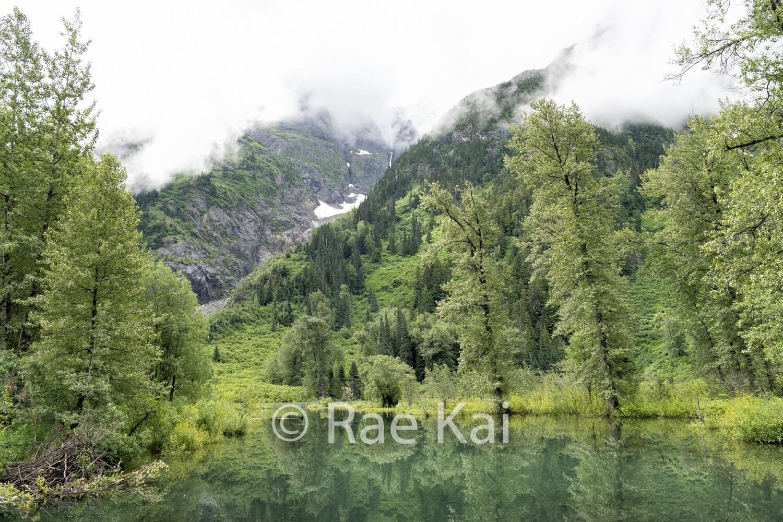 Lush Lake-Traditional Photo