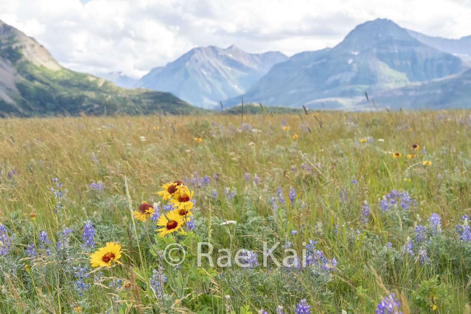 Field Of Flowers-Traditional Photo