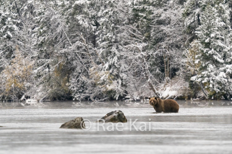 Snow Wonder-Traditional Photo