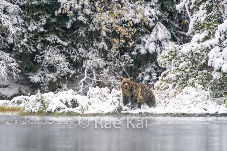 Recent Snowfall-Traditional Photo
