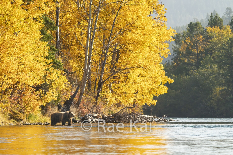 Fall Corner-Traditional Photo