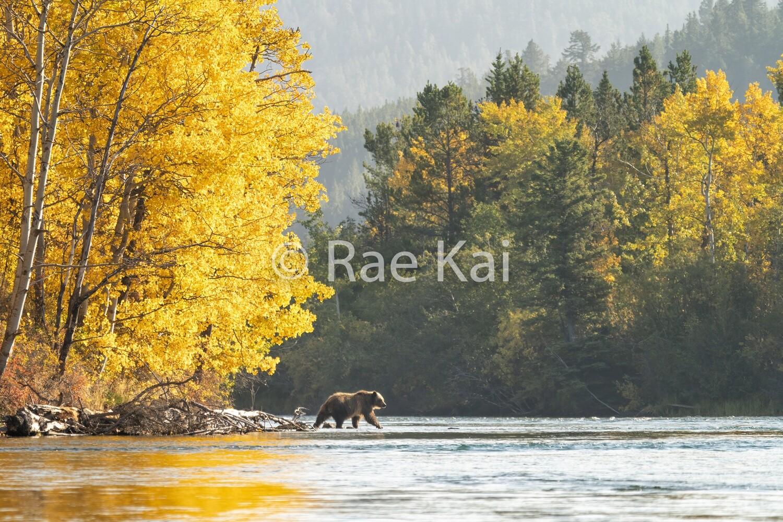 Fall Splendor-Traditional Photo
