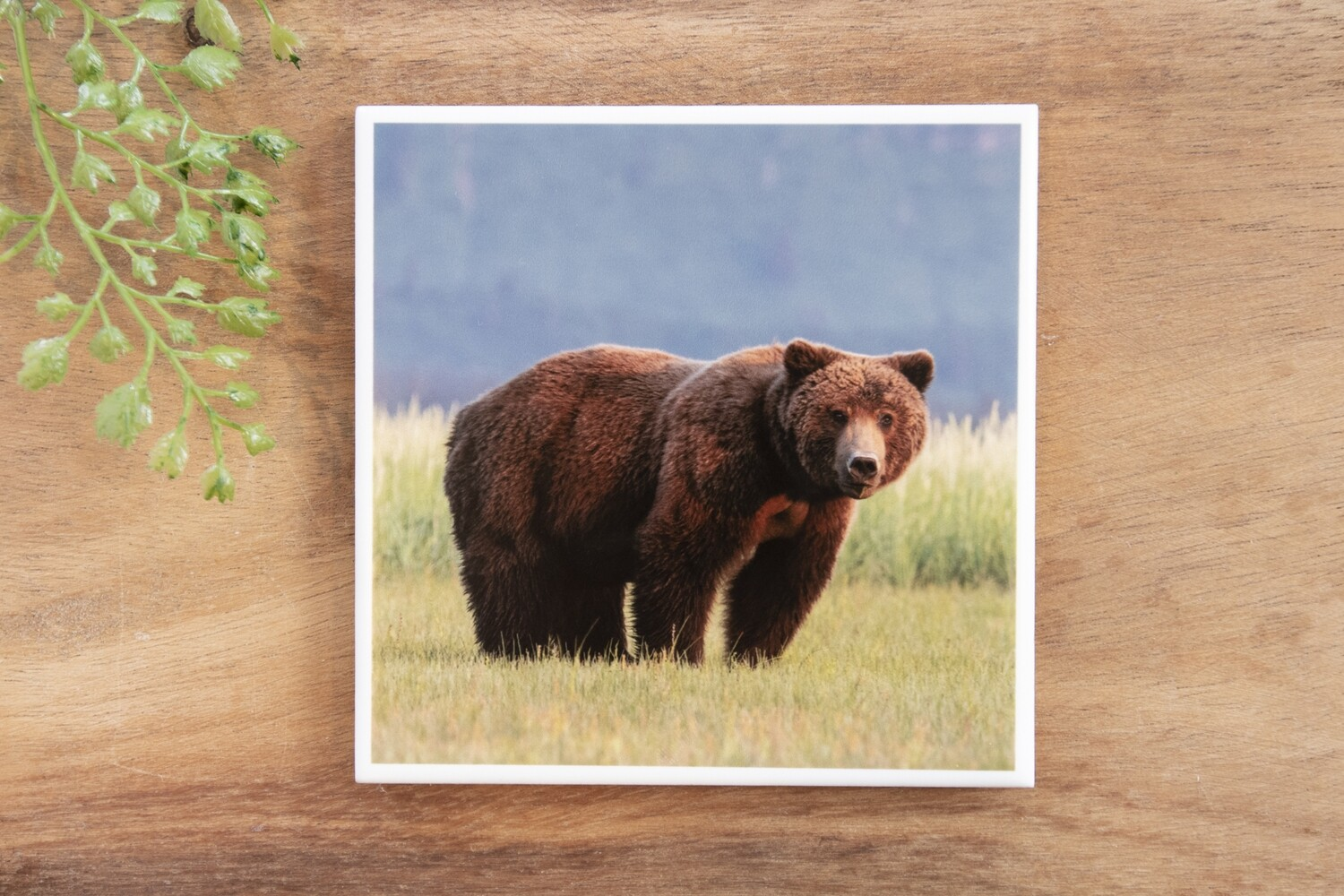 Chocolate Bear-Nature Photo Coaster