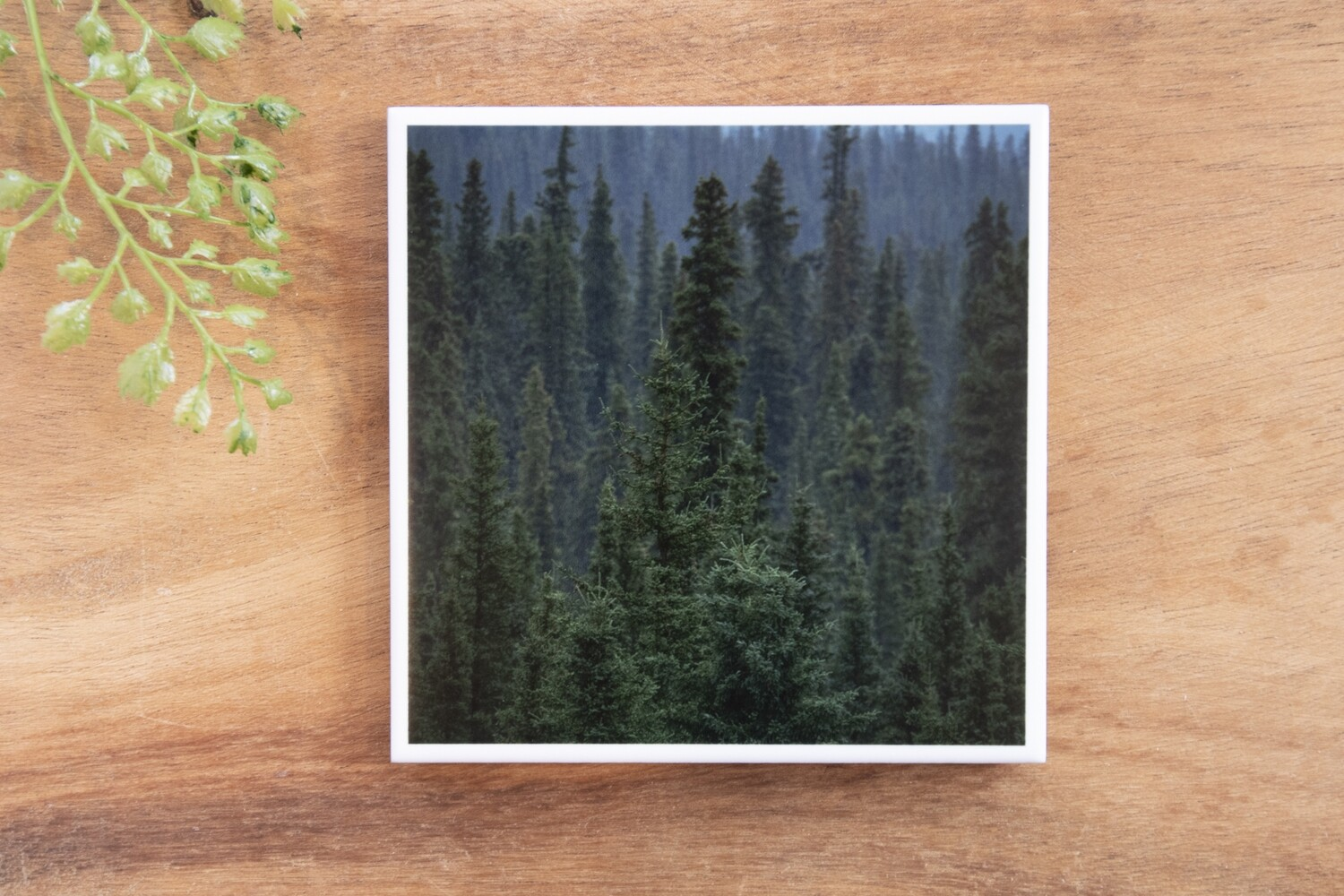 Forest Tree Tops-Nature Photo Coaster