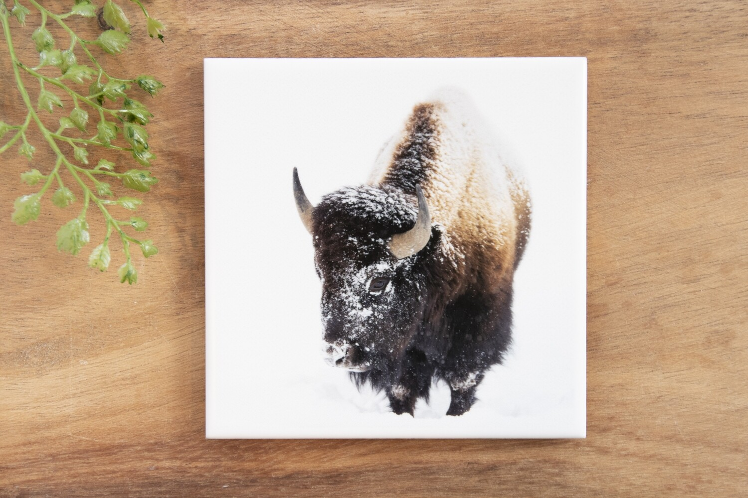 Snow Bison-Nature Photo Coaster