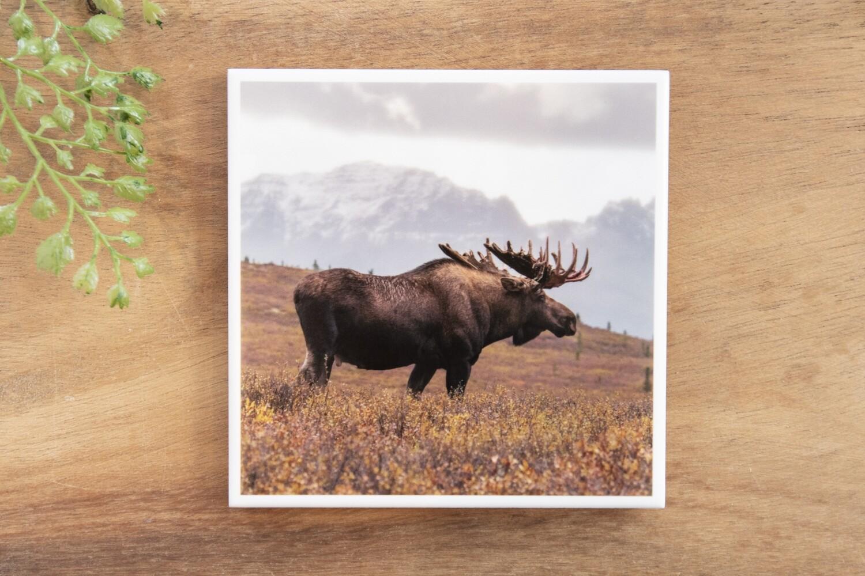 Rasta Moose-Nature Photo Coaster
