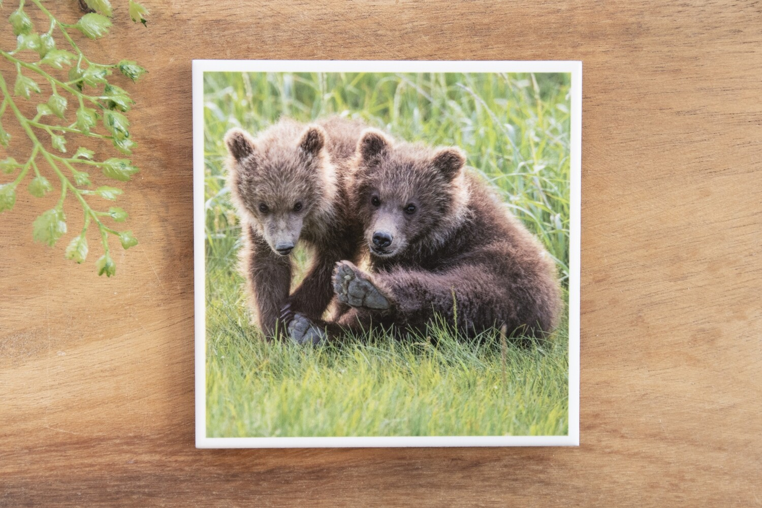 Two Cubs-Nature Photo Coaster