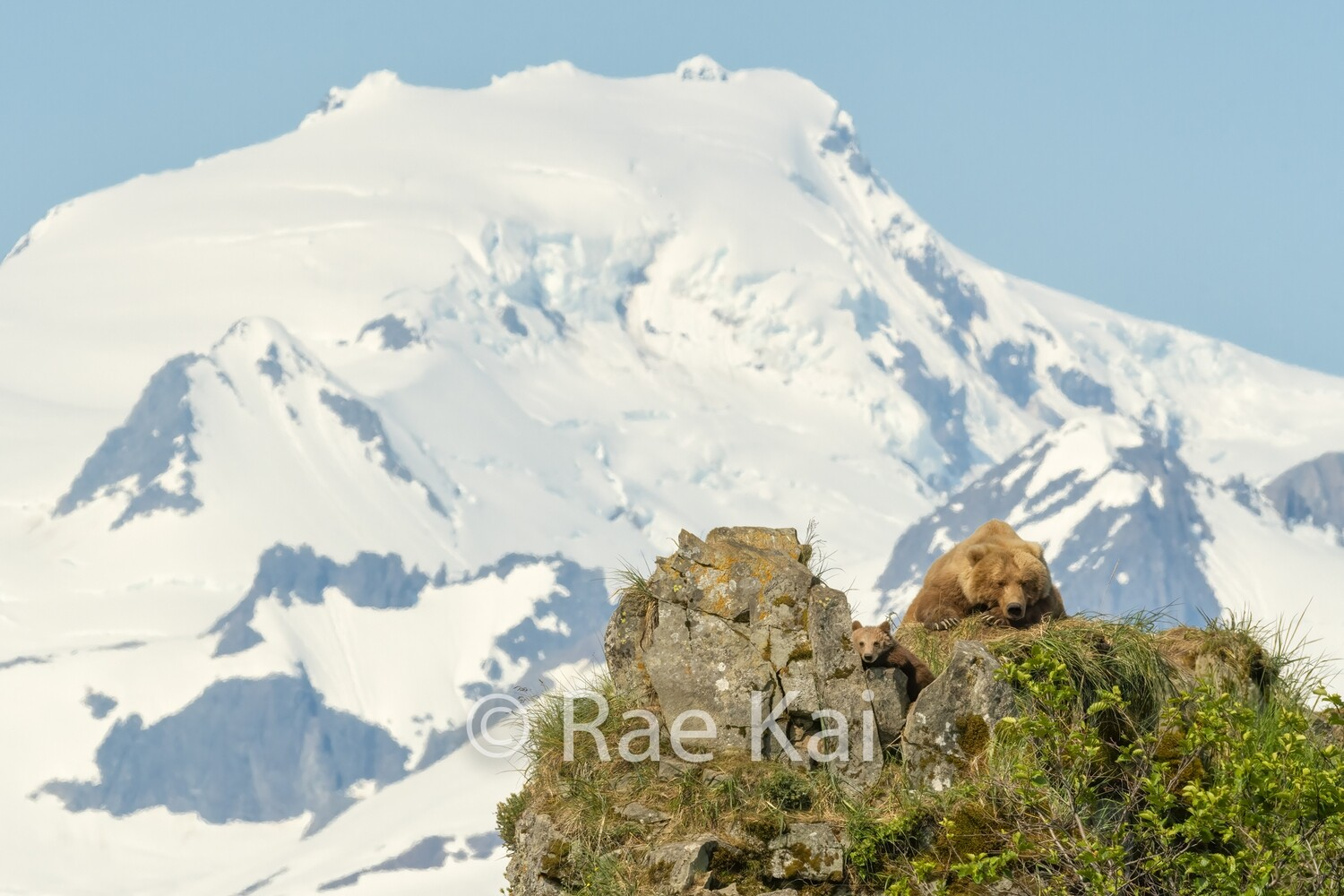 Brown Bear Glacier Ridge-Traditional Photo