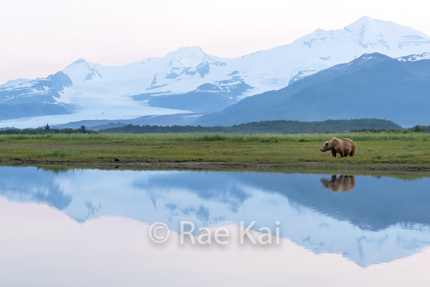 Brown Bear Evening Reflection-Traditional Photo