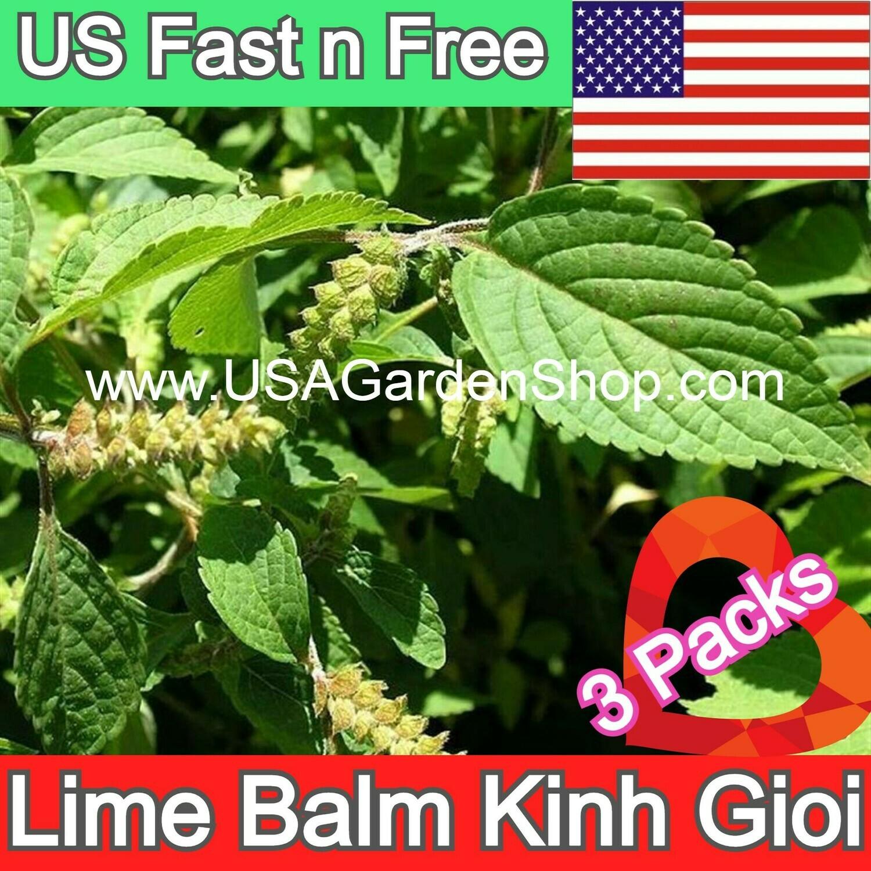 Lime Lemon Balm Lamiaceae Mint Kinh Gioi