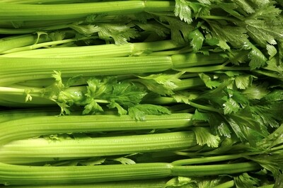 Celery Plants Chinese Leaf Celery - Can Tau