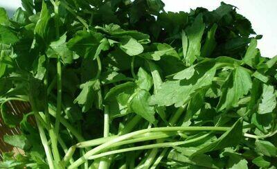 Water Celery Water Dropswort Water Parsley