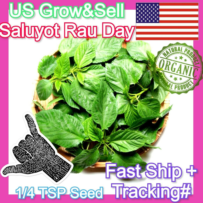 Saluyot Molokhia Jute Egyptian Spinach Hat rau day