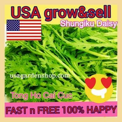 Shungiku Daisy Tong Ho Cai Cuc