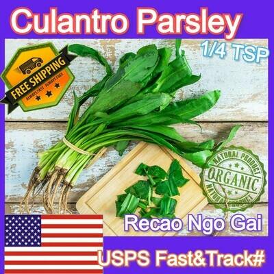 Culantro Coriander Parsley Ngo Gai Recao fresh seeds