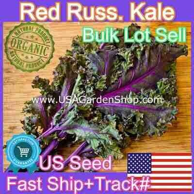 Kale Seeds Red Russian Cai Xoan