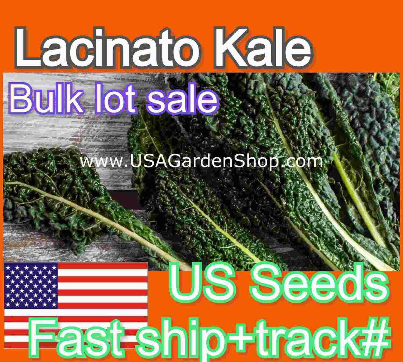 Lacinato Kale Seeds Dinosaur Kale