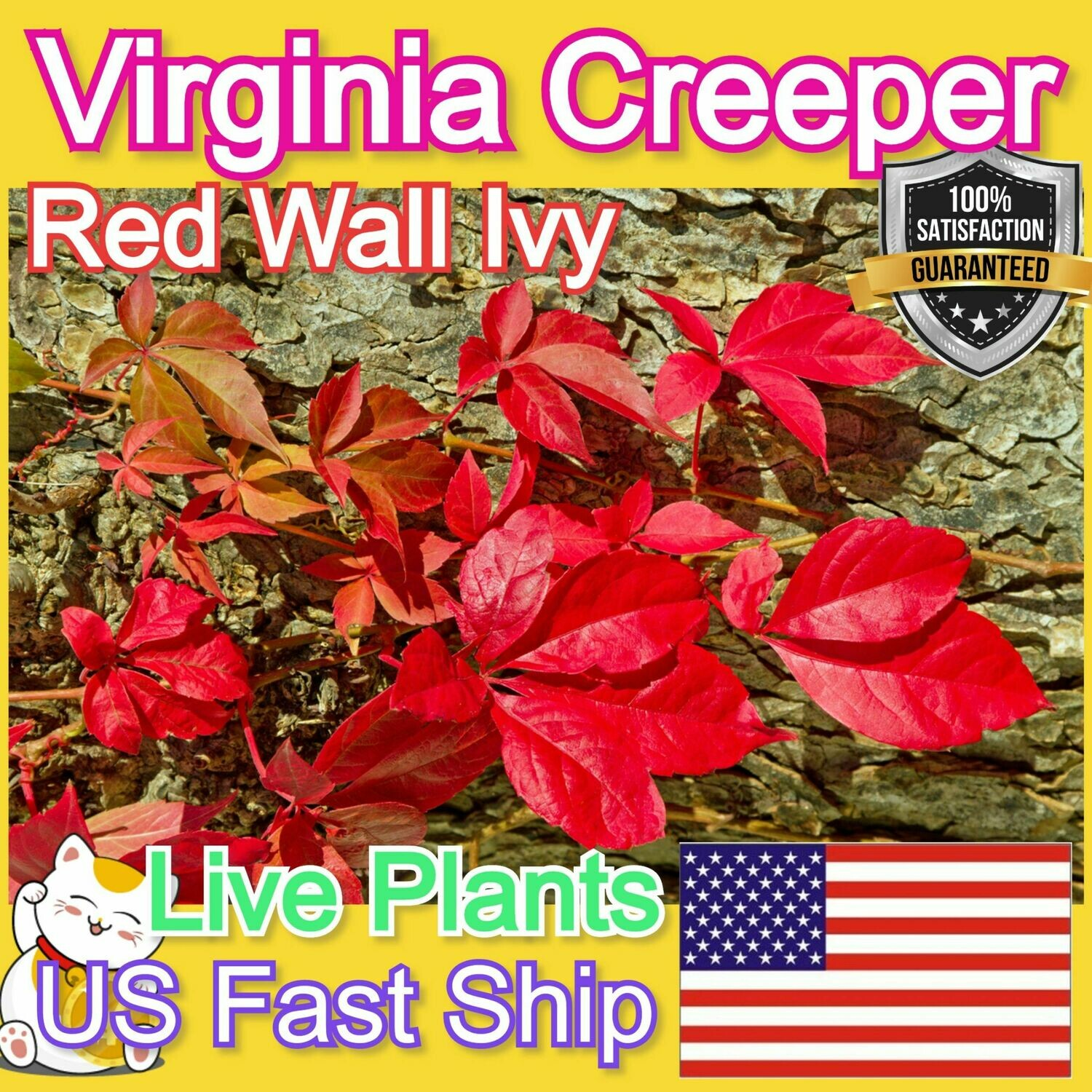 Virginia Creeper plant Red Wall Ivy