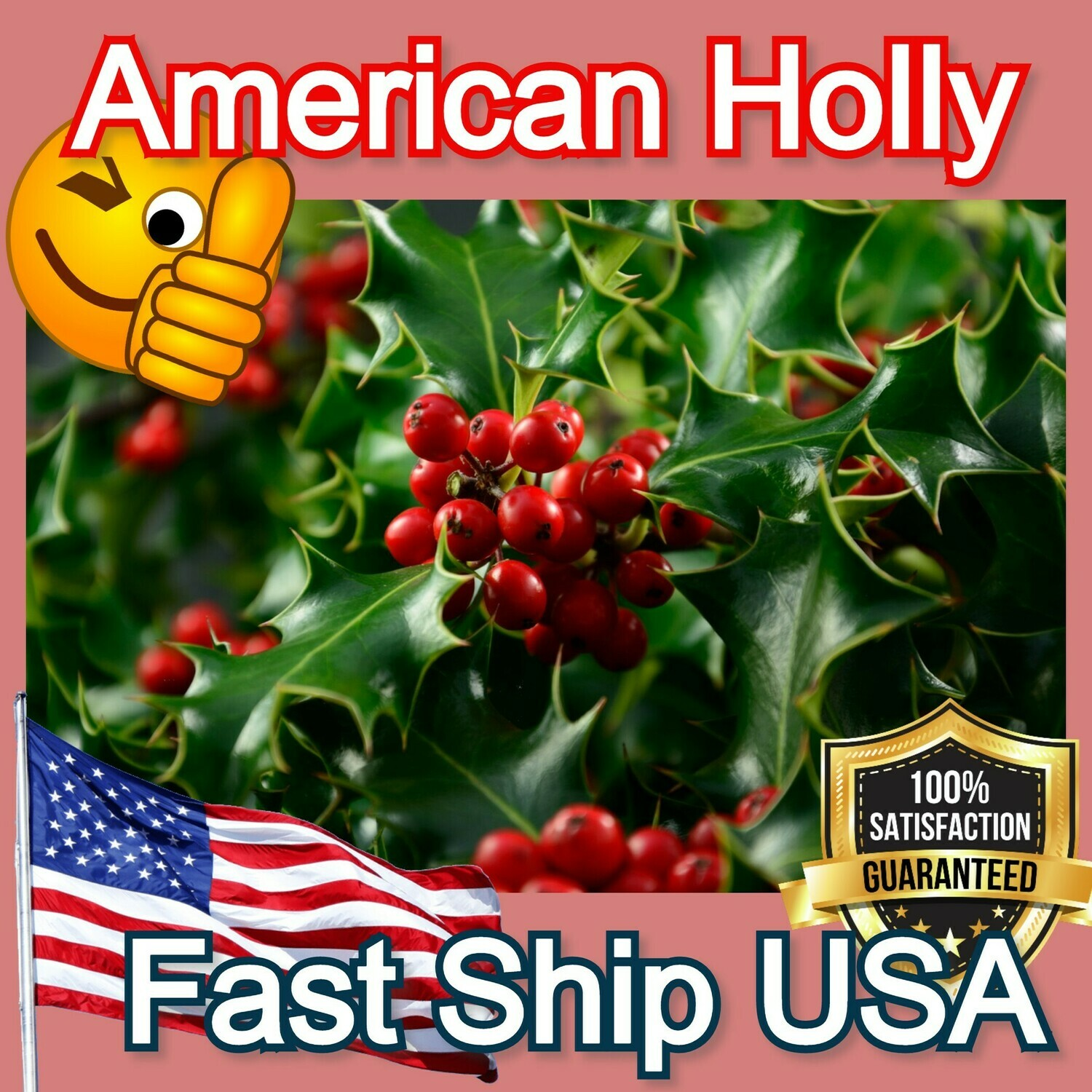 American Holly tree hardy shrub