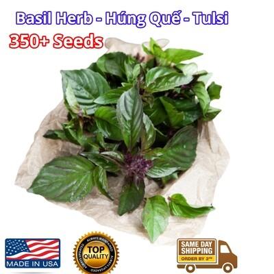 Thai Basil Seeds Siam Queen Hung Que Tim