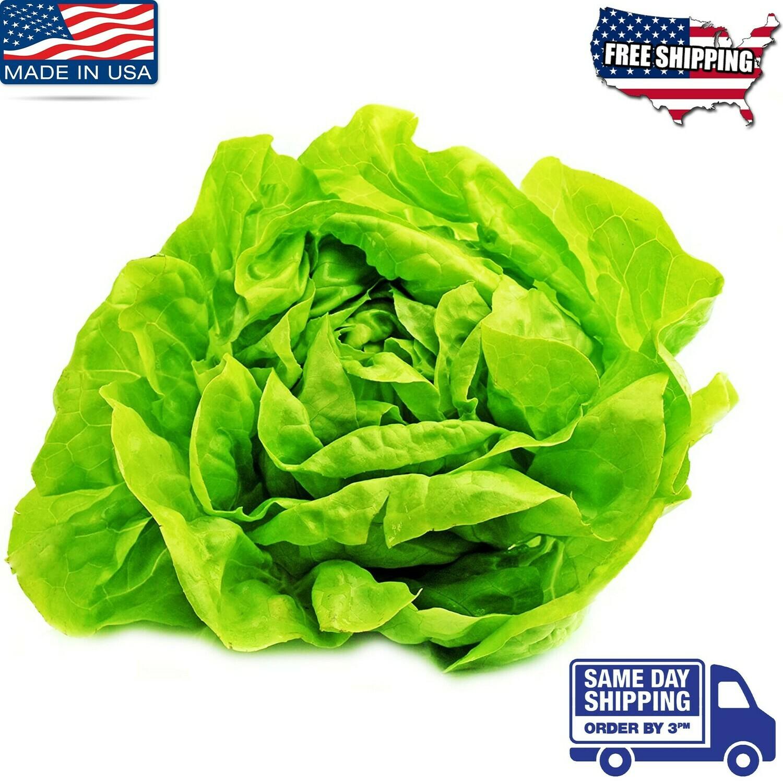 Buttercrunch  Lettuce Seeds Xà lách