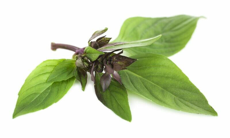 Thai Basil Seeds Siam Queen Hung Que Tim Live Plant