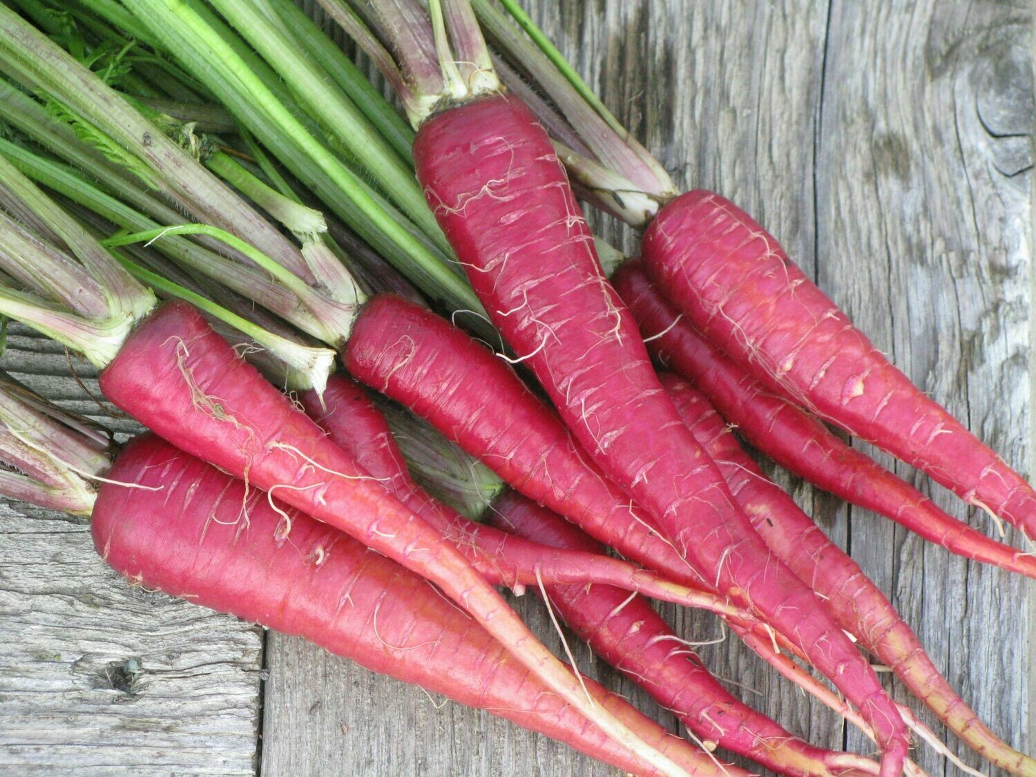 PURPLE DRAGON CARROT Seeds