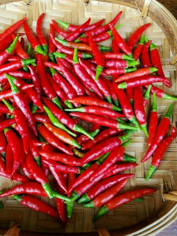 Thai Chili Hot pepper Seeds bird's eye ớt chỉ thiên