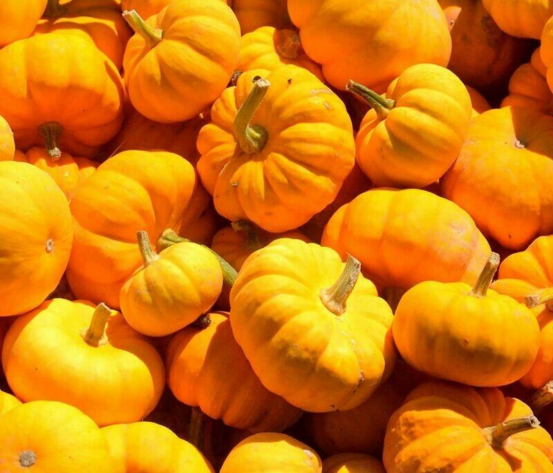 jack be little Squash Pumpkin