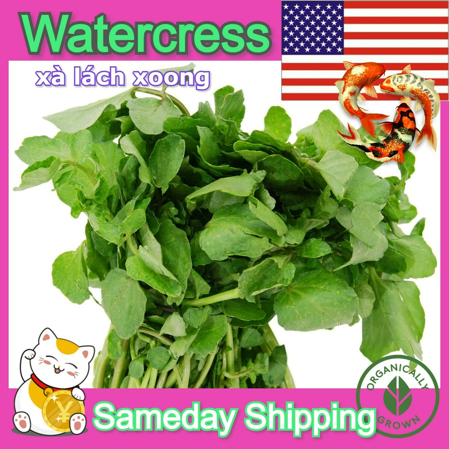 WATERCRESS yellowcress Nasturtium officinale Summer Seeds leaf veggie Seeds
