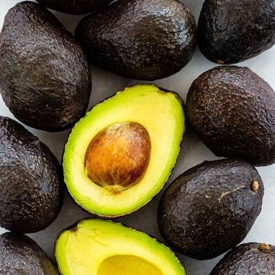 Avocado Live Plant