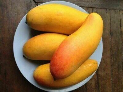 Mahachanok Thai long Mango Xoai Thai