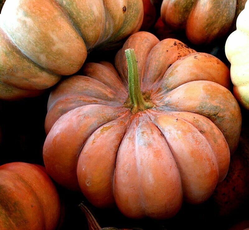 Aromatic Muscade De Provence Pumpkin
