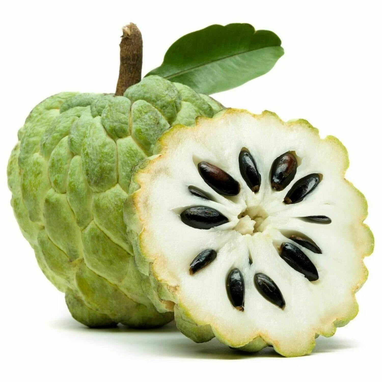 Sugar apples (Annona squamosa) Cay Na 7-8ft