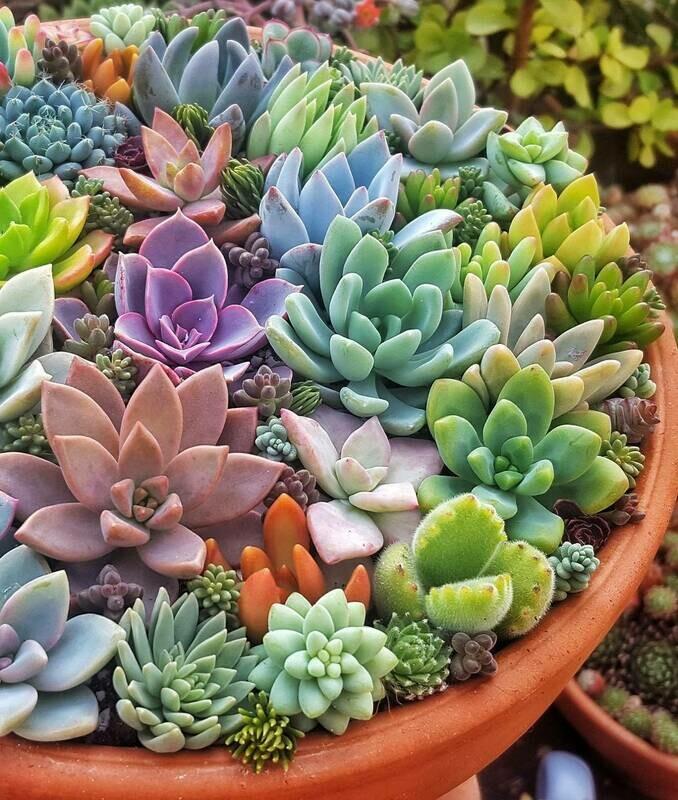 Succulents Seeds Rare Indoor Flower Mini Cactus mix