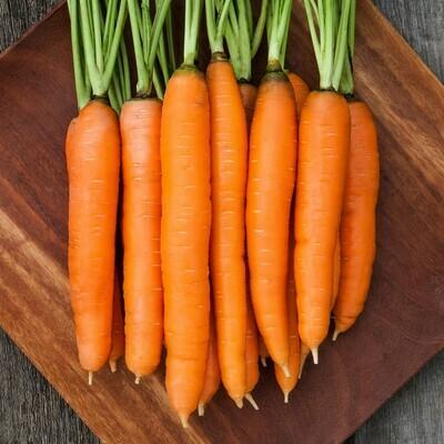 Carrot, Nantes Half Long Organic Carrot