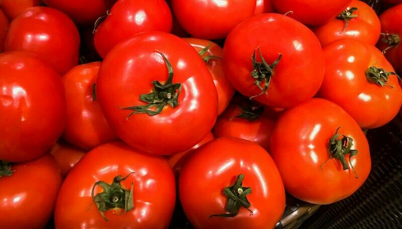 Tomato, BushSteak Tomato Hybrid